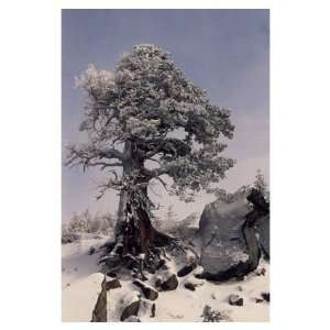 Ryme Ice Covered Tree, Note Card by Barbara Brundege, 5x7
