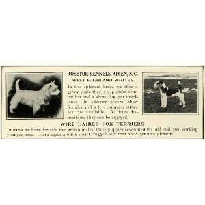1930 Ad Wire Haired Fox Terrier West Highland White Dog